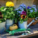 ガーデニング向けの夏の花は?6つの注意点と厳選オススメの花11選!
