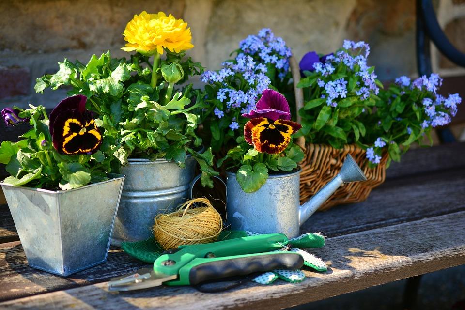ガーデニング 夏の花