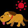 犬の夏バテ!段階別症状の見分け方と効果的な夏バテ防止方法5選!