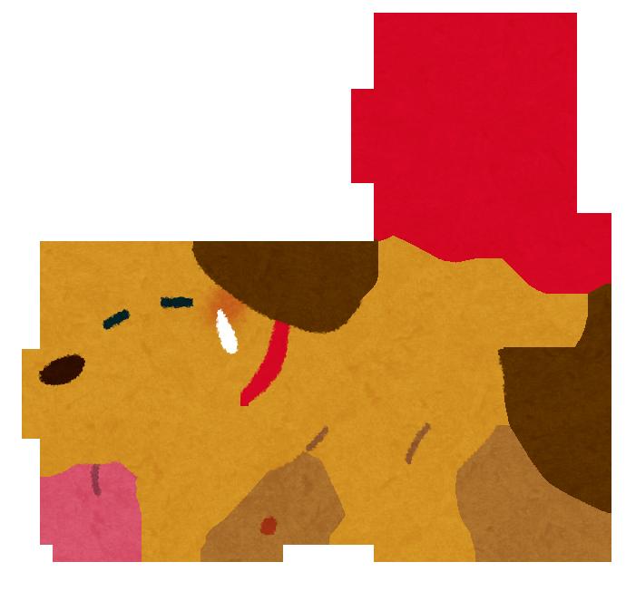 犬 夏バテ