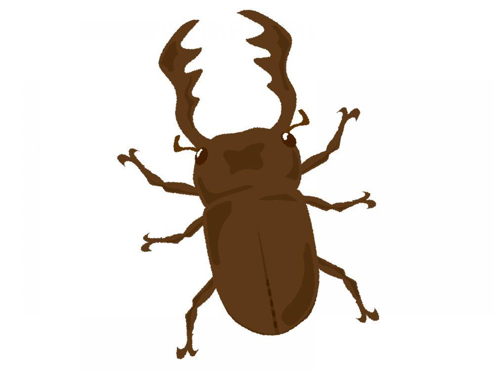 クワガタ 幼虫