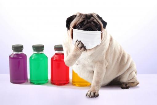 インフルエンザ 予防接種 熱が出ない